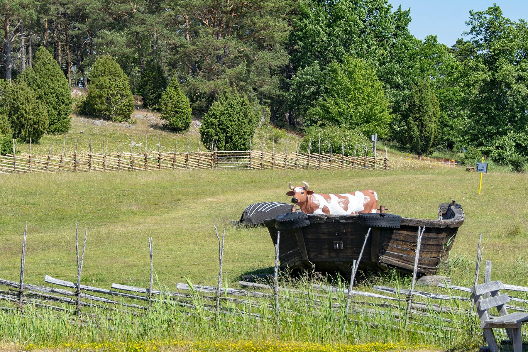 Ko på upplevelseleden i Stendörrens naturreservat.