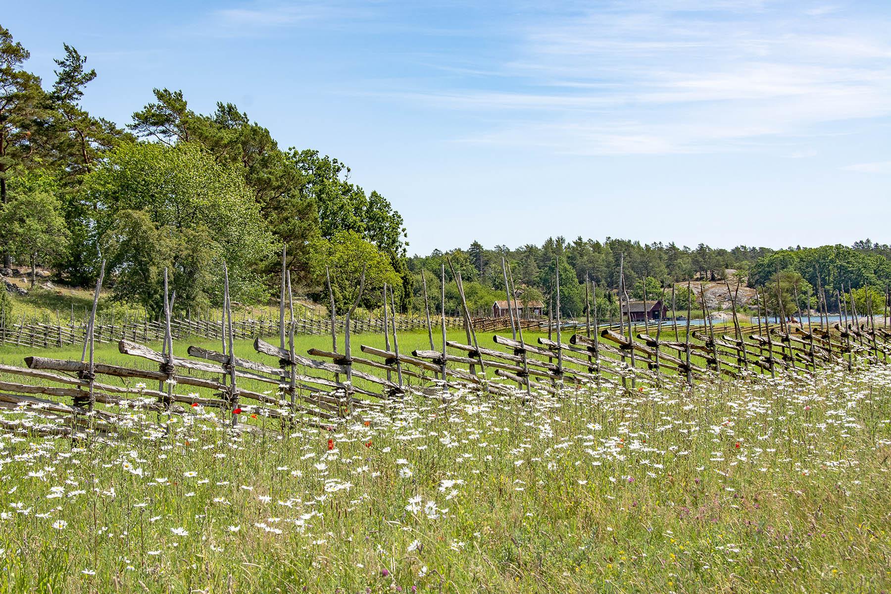 Stendörrens naturreservat