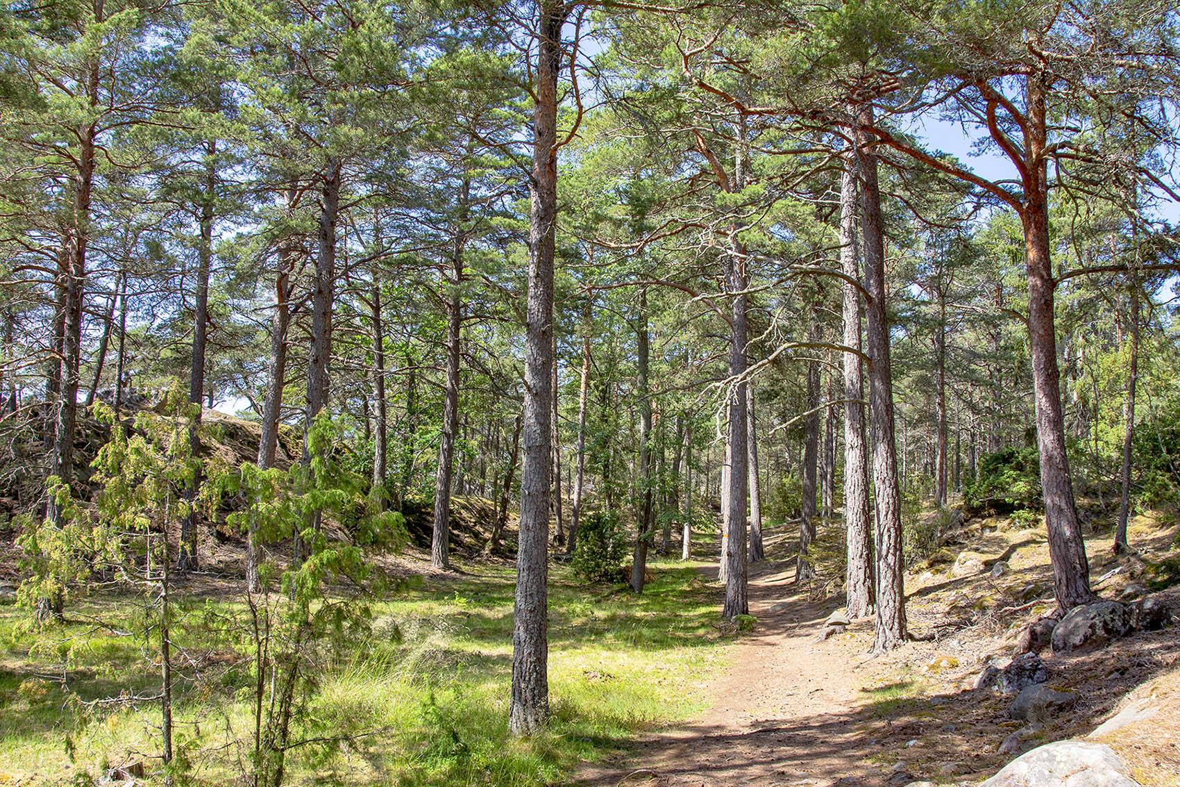 Skog på stigen mellan Naturum och Stora Krokholmen.
