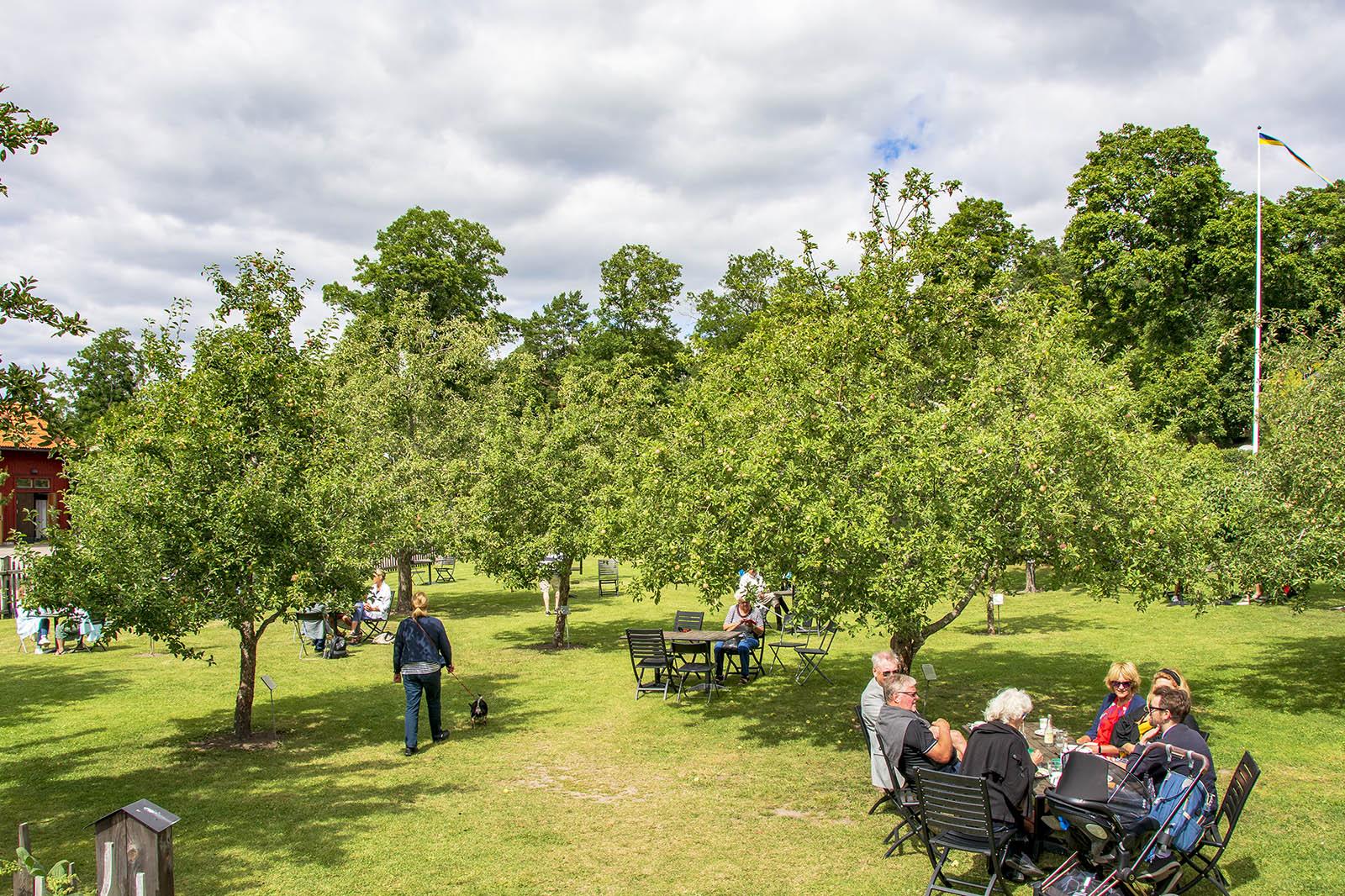 Linnés Hammarby äppellunden