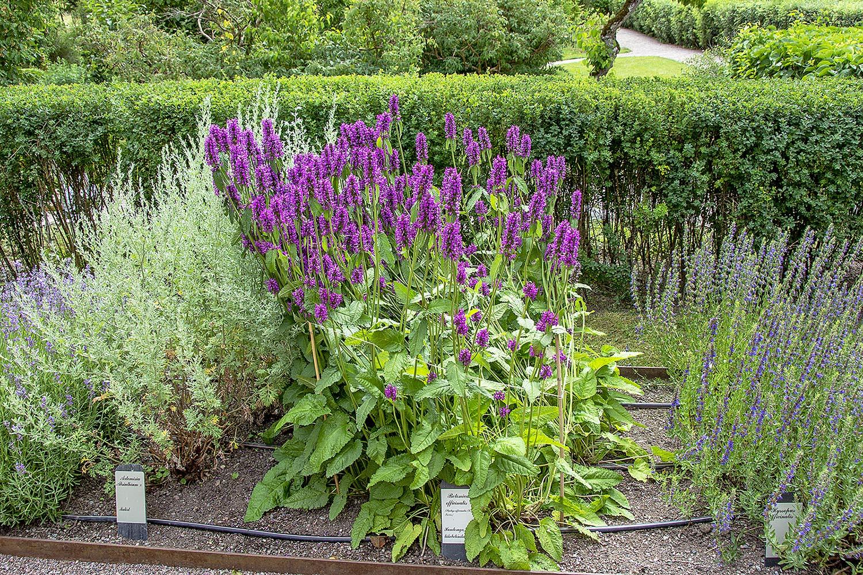 Blommor Linnés Hammarby