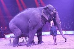 Jana Lacey-Krone, Elefantendame Bara, Premiere 1. Winterprogramm Circus Krone in München  2019