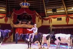 PK Circus Krone März 2017