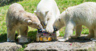 Eisbären Tierpark Hellabrunn München