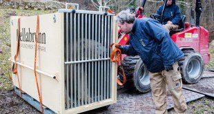 Umzug Nela Nobby Tierpark Hellabrunn