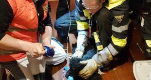 Hund im Treppenlift eingeklemmt Quelle Foto Aktion Tierrettung München