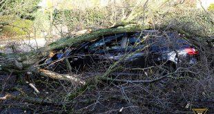 Umgestürzter Baum in der Agnes-Bernauer-Straße München begräbt fünf Autos Quelle Foto Feuerwehr München