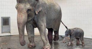 Elefanten-Nachwuchs im Tierpark Hellabrunn