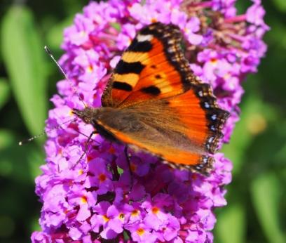 Vlinder in bloementuin