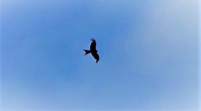 Vrij als een vogel