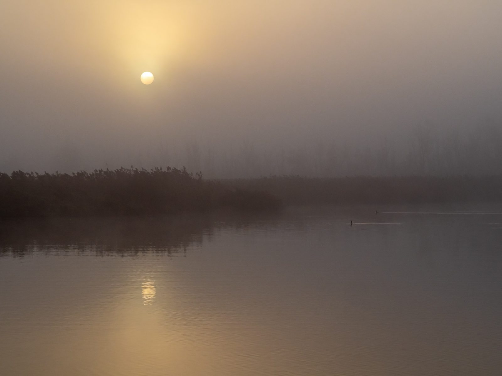 Sunrise and heavy fog at Rostock an der Warnow