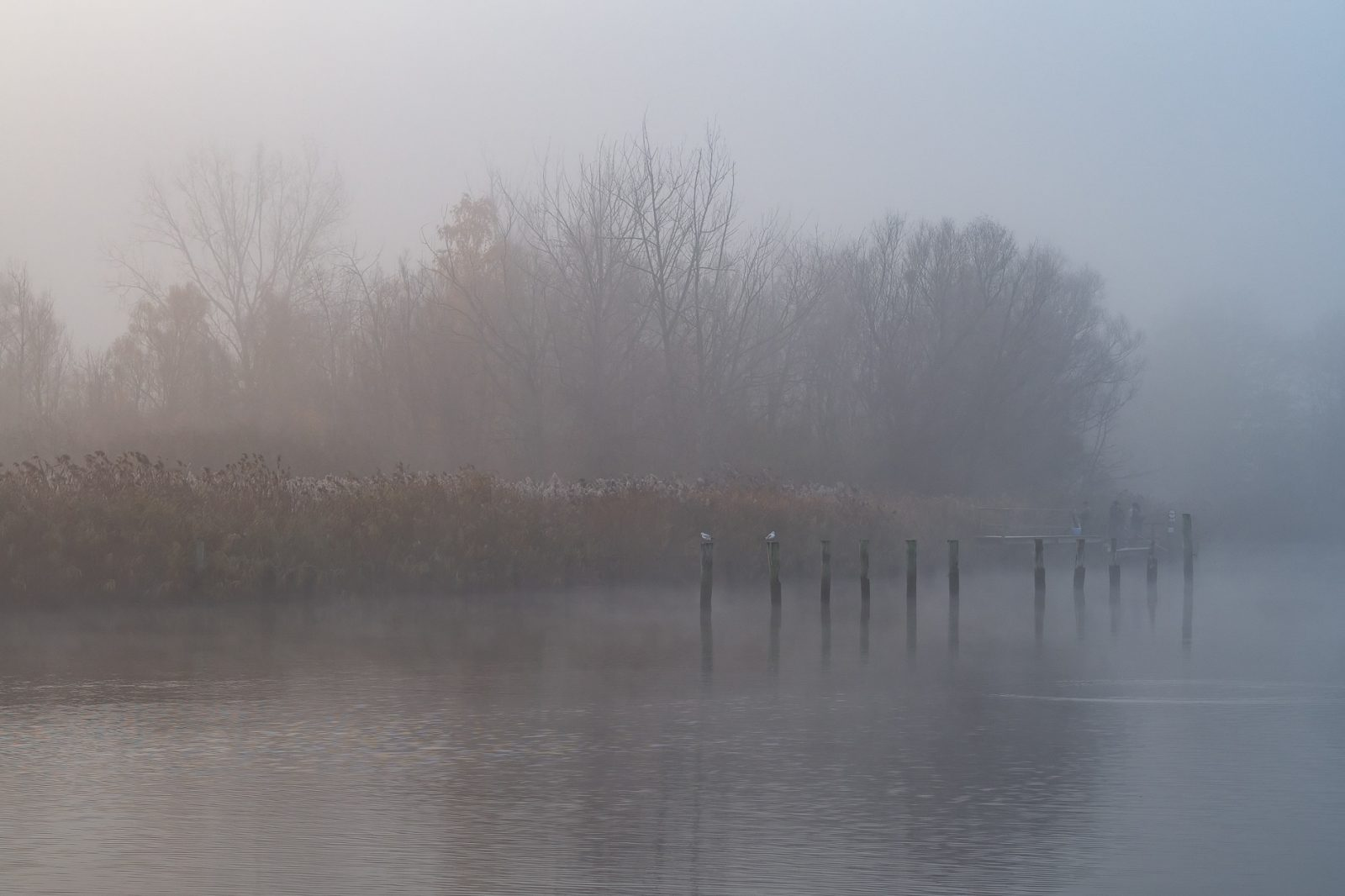 Heavy fog in the morning at Rostock an der Warnow