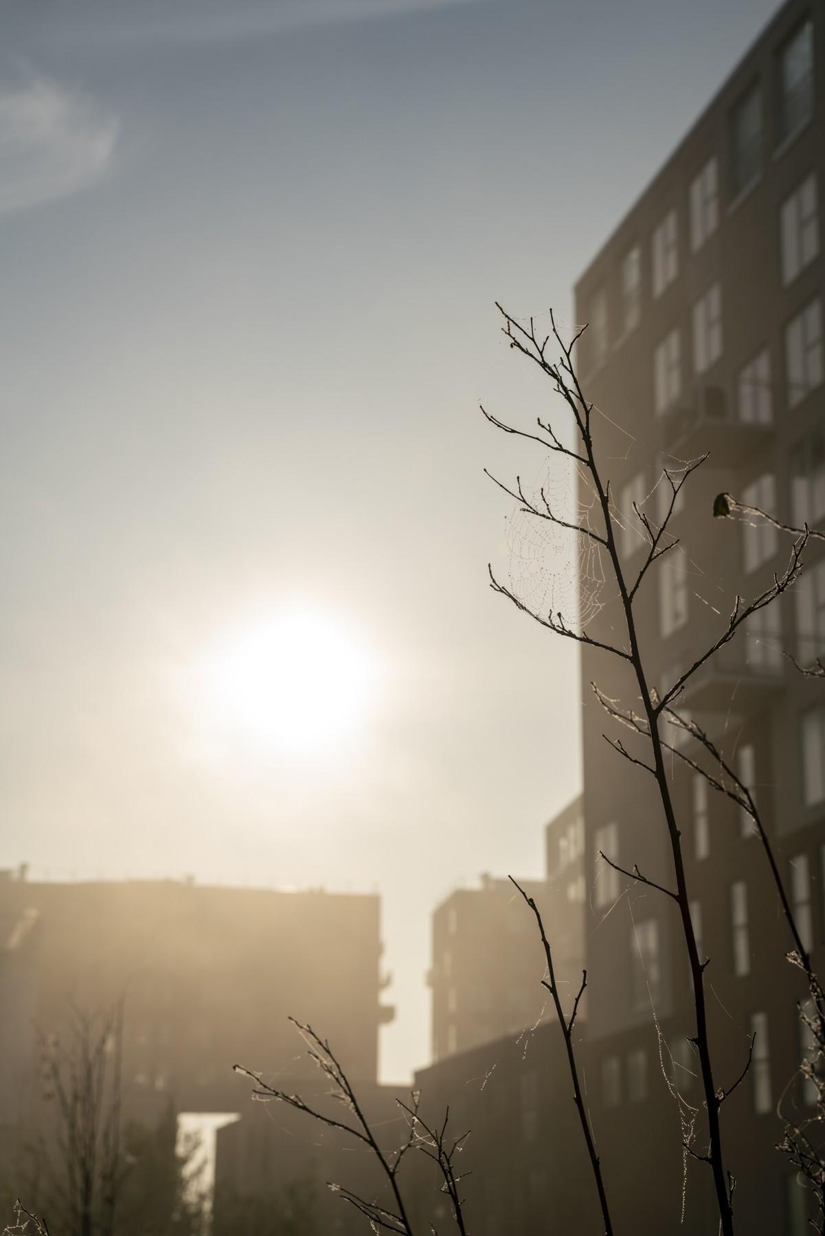 Sommerstemning om efteråret i Ørestad Syd