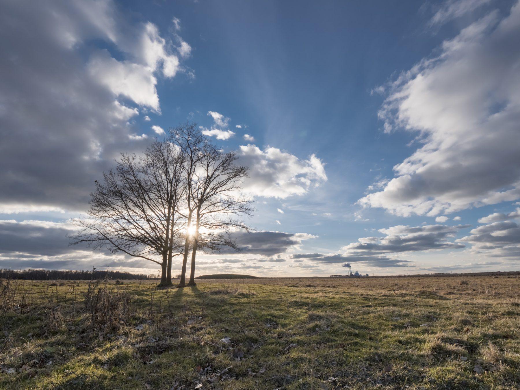 Landskabsfotografering: Kalvebod Fælled om vinteren - træer, sol og blå himmel