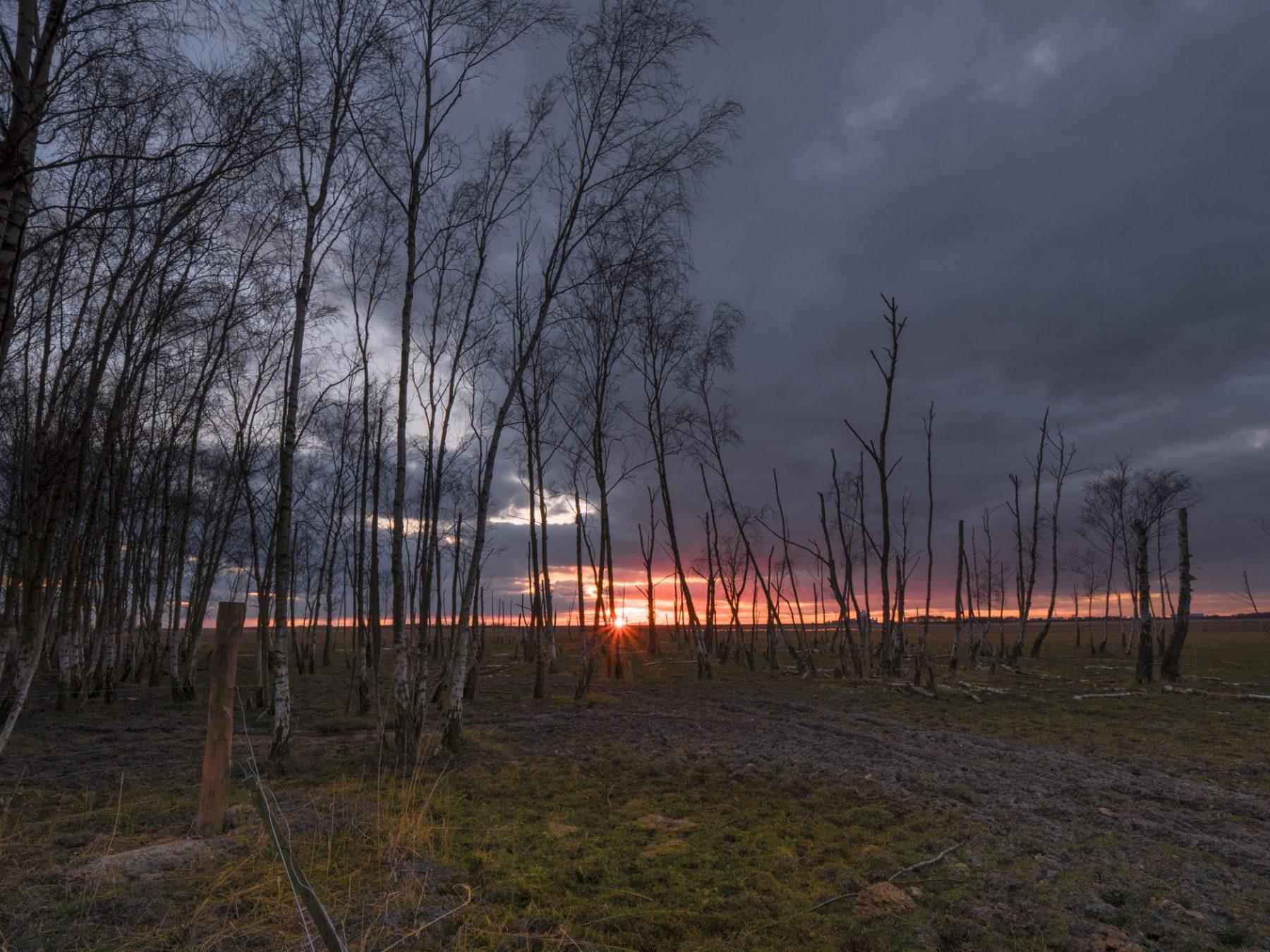 Landskabsfotografering: Kalvebod Fælled ved solnedgang
