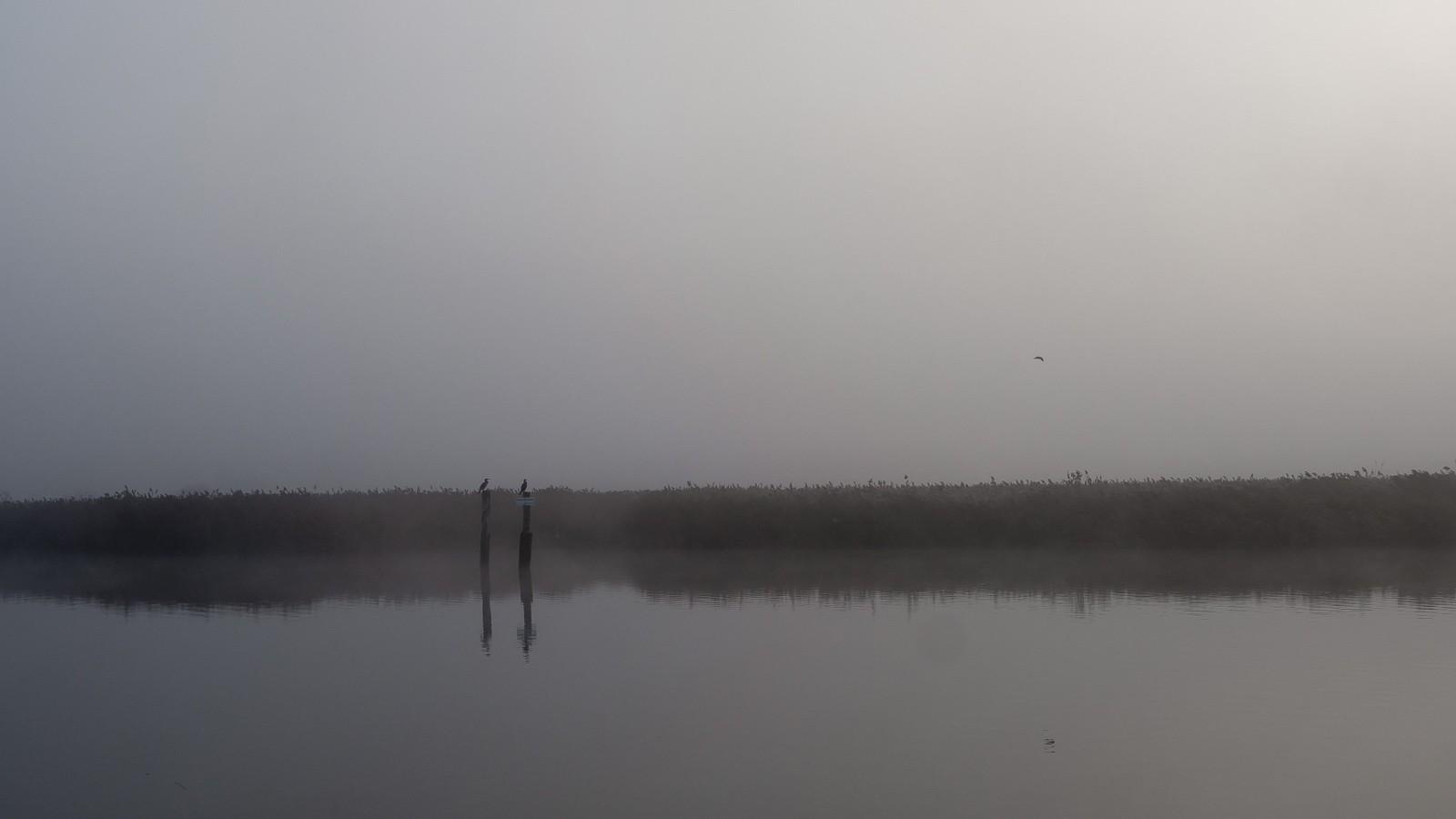 Tåget morgen ved Rostock an der Warnow