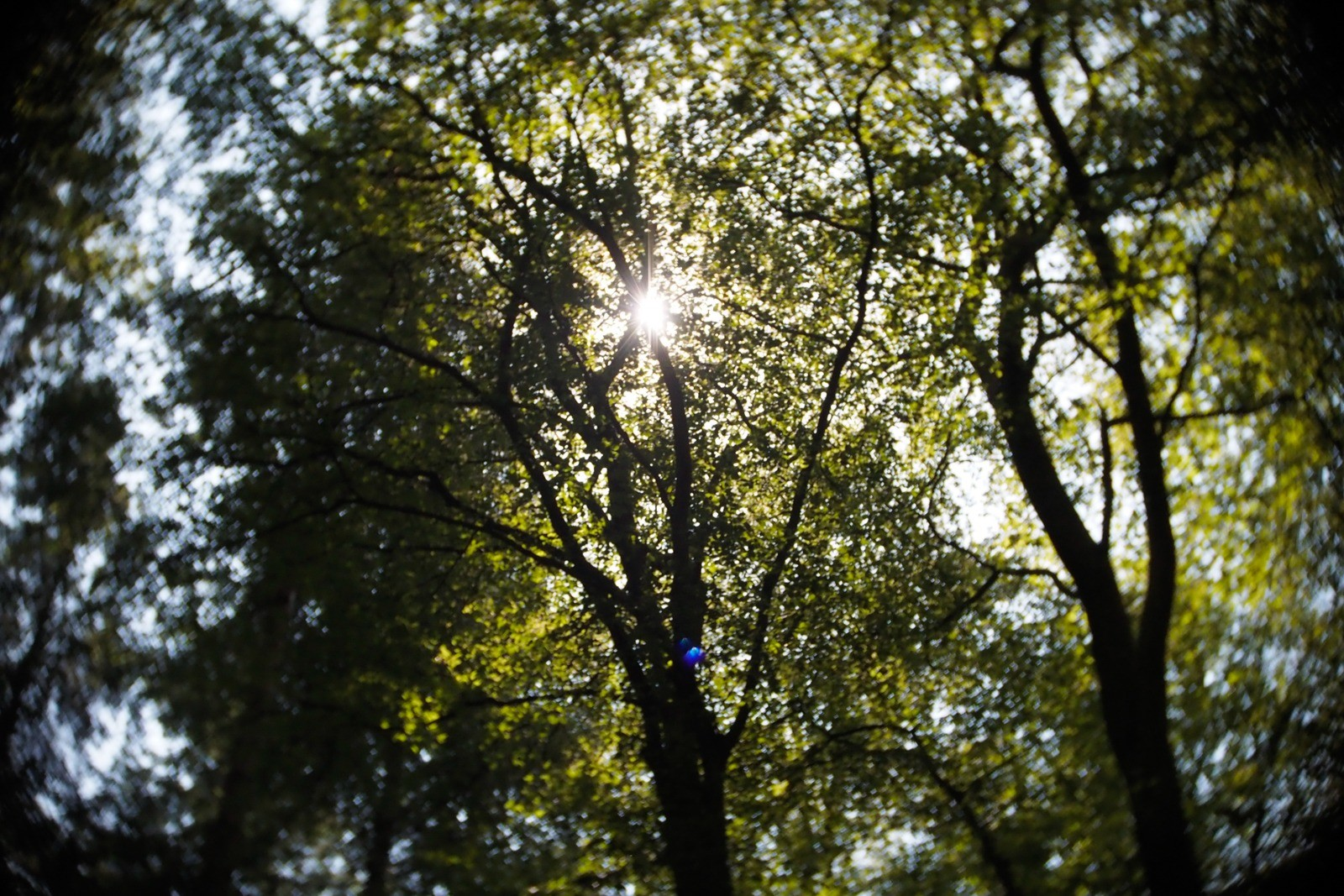 I skoven, Almindingen, Bornholm, fotograferet med et SLR Magic Toy Lens