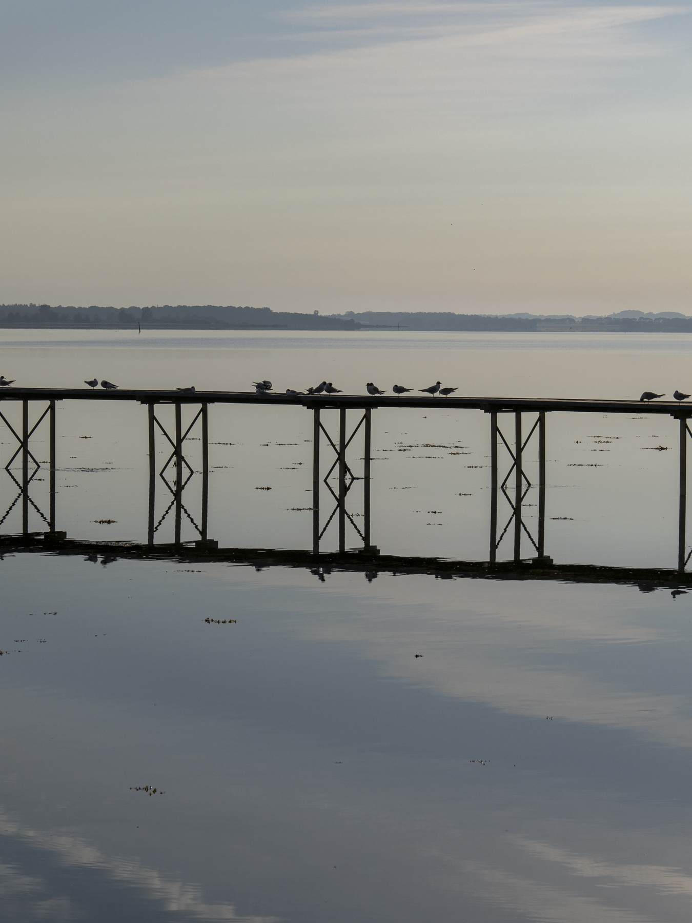 Fuglene trives på havnefronten