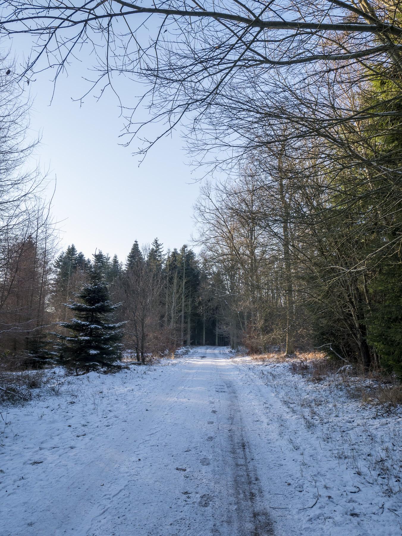Sne i skoven ved Farum Søsti