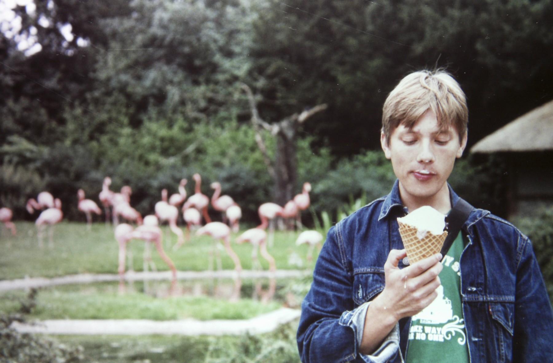 Flamingoer? Næh, jeg har is...