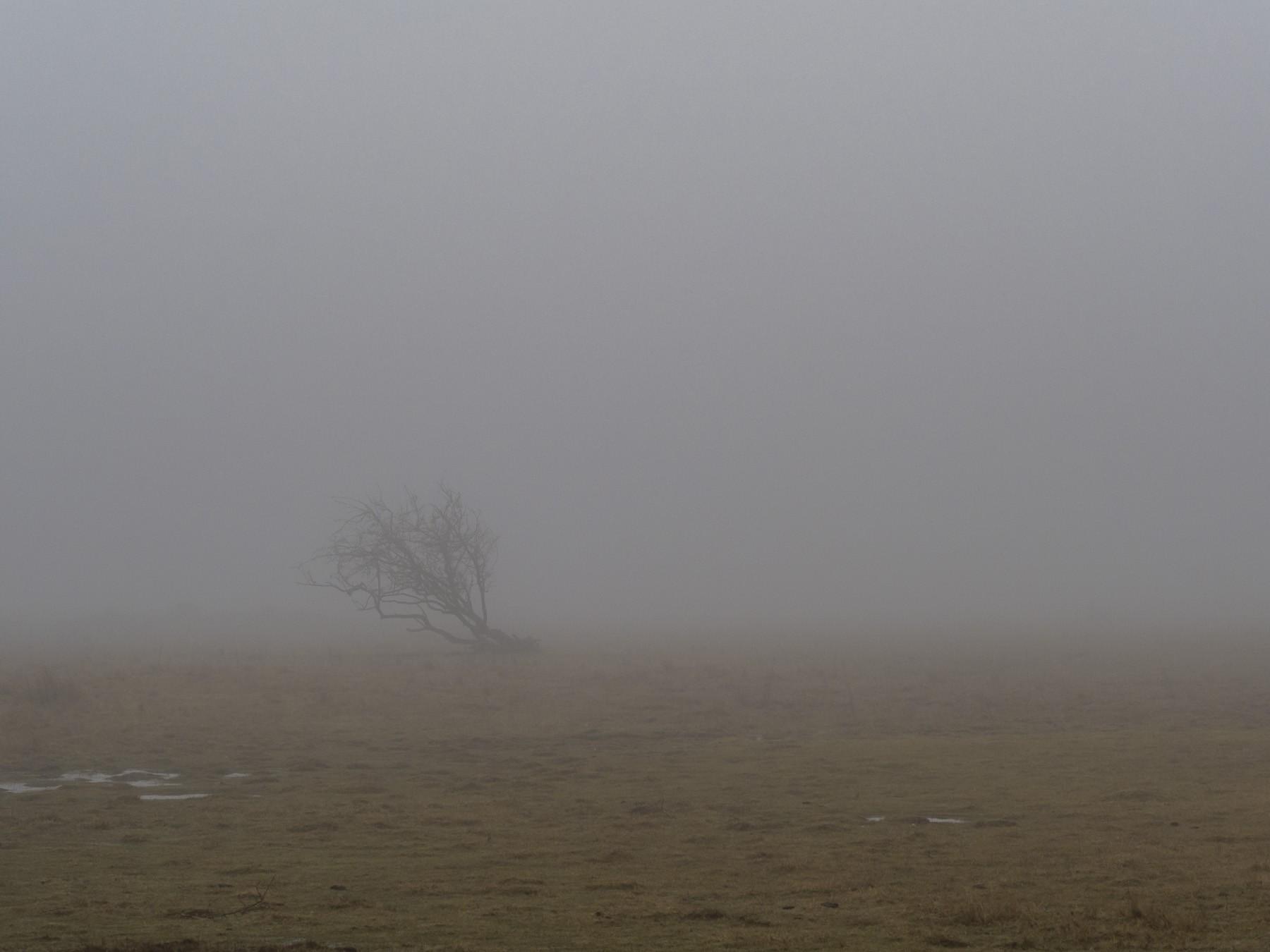 """""""Træet"""" på Kalvebod Fælled"""