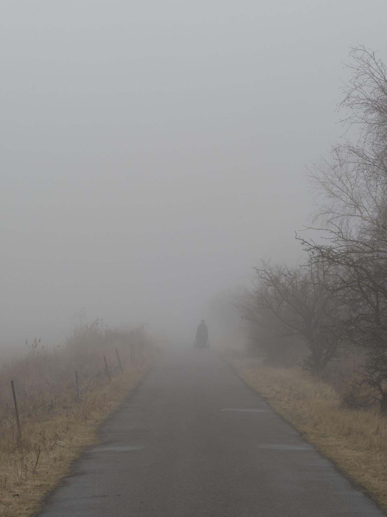 Kalvebod Fælled i tyk tåge