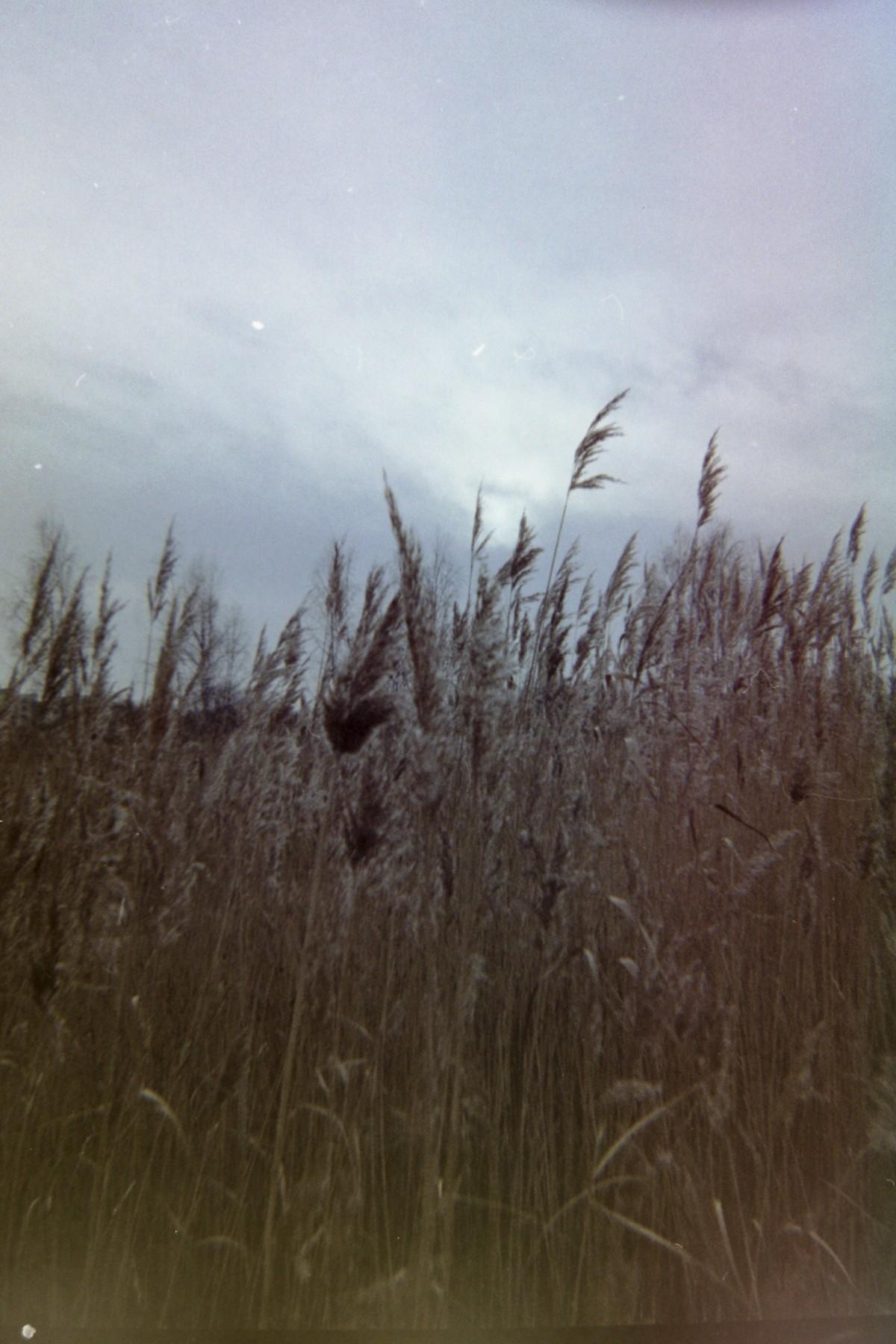 Naturpark Amager - Agfa Reusable 35mm Camera