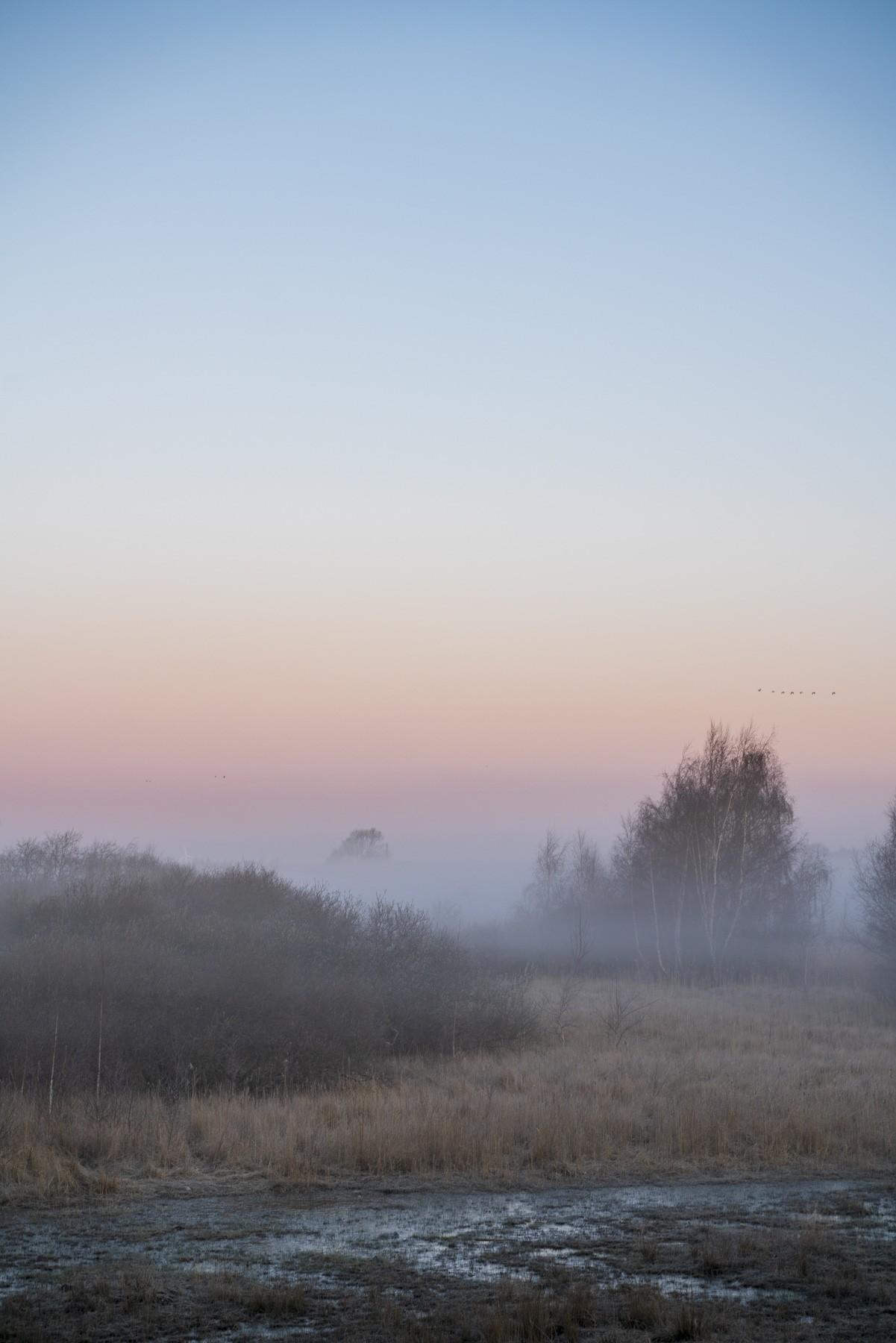 Naturpark Amager i tåget farveeksplosion