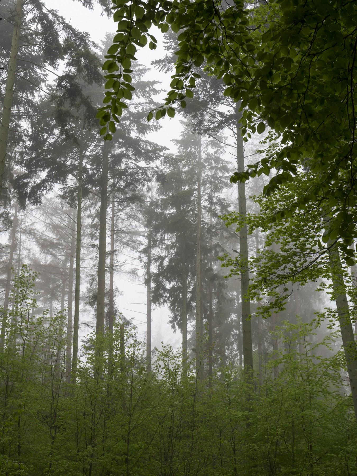 Hønsehals Skov