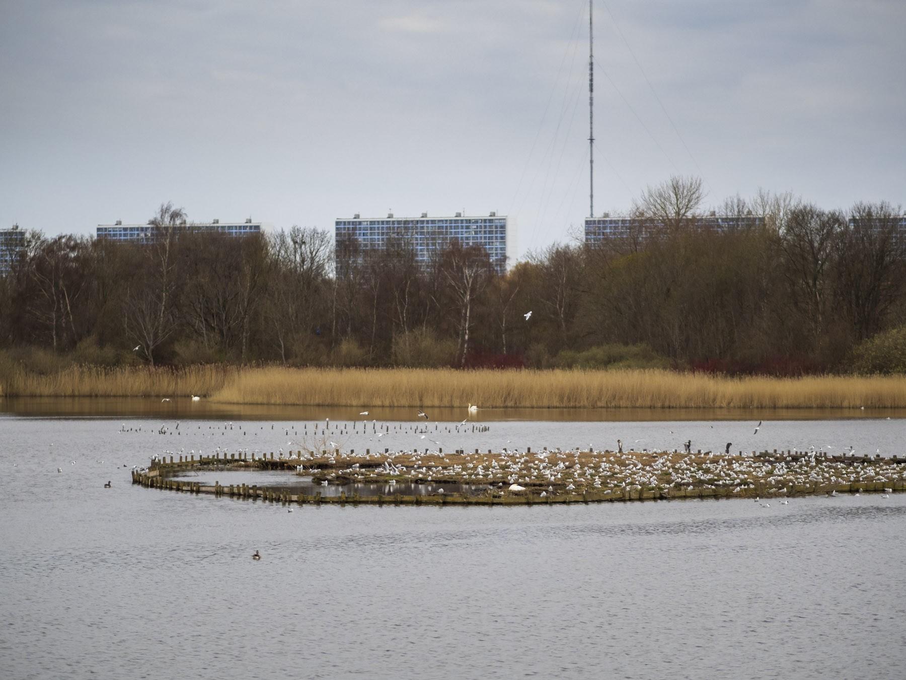 Fugle yngler og Høje Gladsaxe i det fjerne