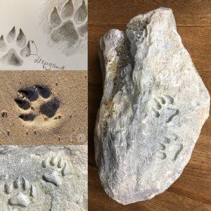 Pootafdruk in steen - nieuws