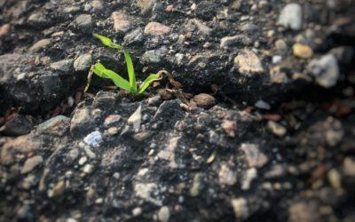 Over aandacht en groei