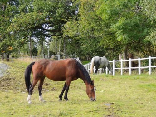 Hästhagar