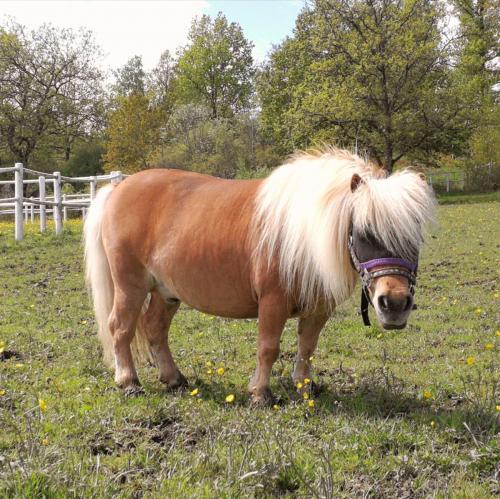 Lilla ponnyn
