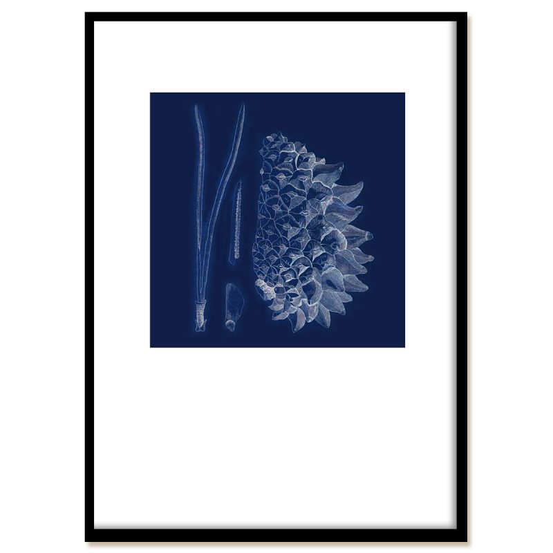 Blueprint of a pine fur - nature is beautiful! With black frame