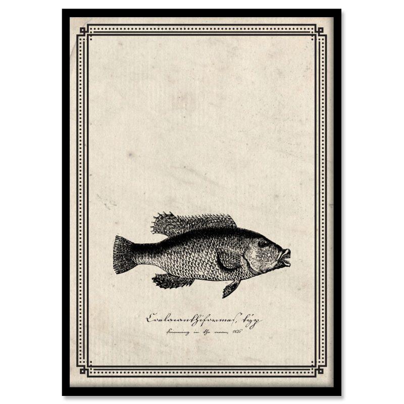 Coelacanthiformes coelacanth Kvastfening sepia