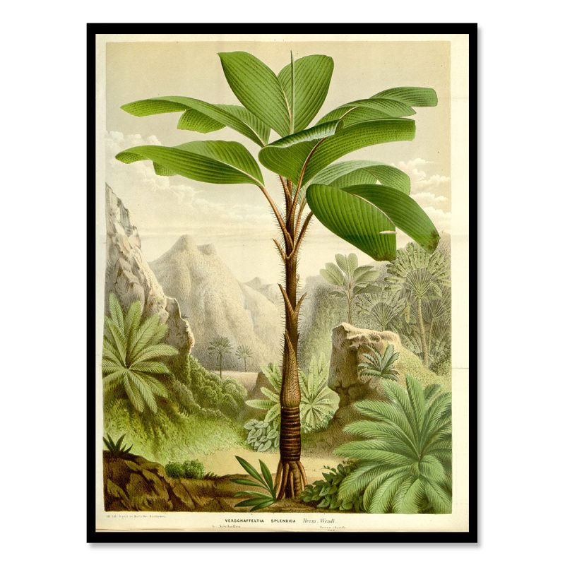 Palmtrees vintage poster illustration