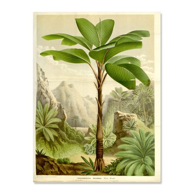 Palmtrees vintage poster illustration no frame
