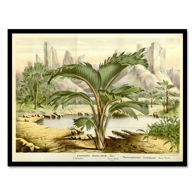 Vintage palm tree seychelles landscape