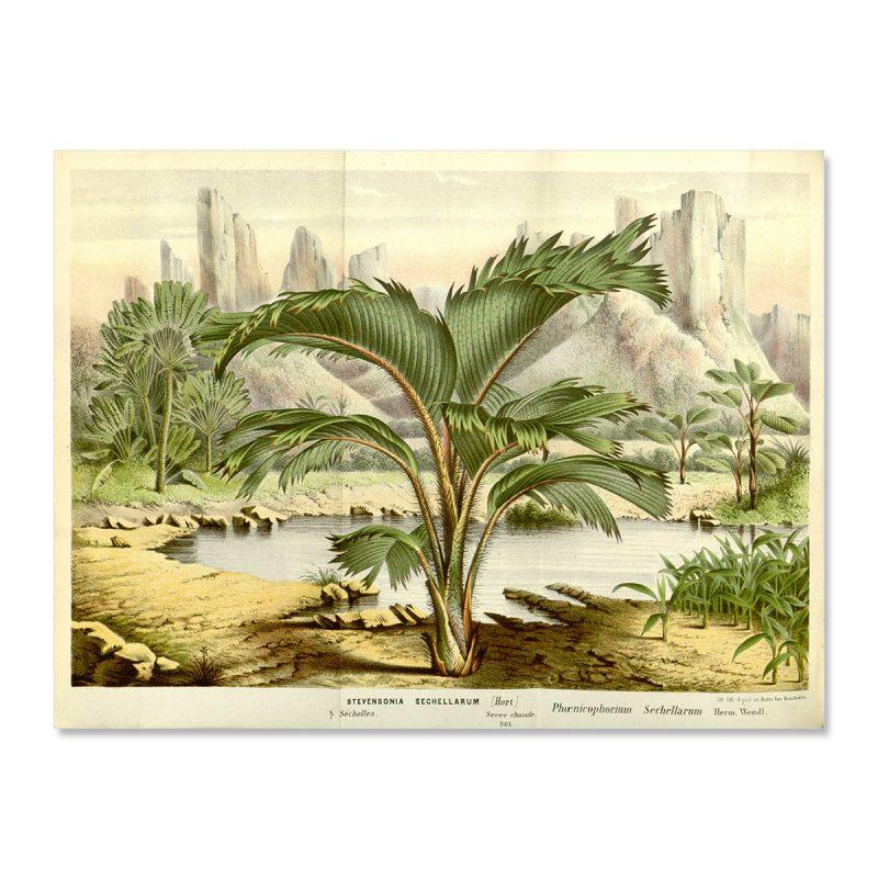 Vintage palm tree seychelles landscape no frame