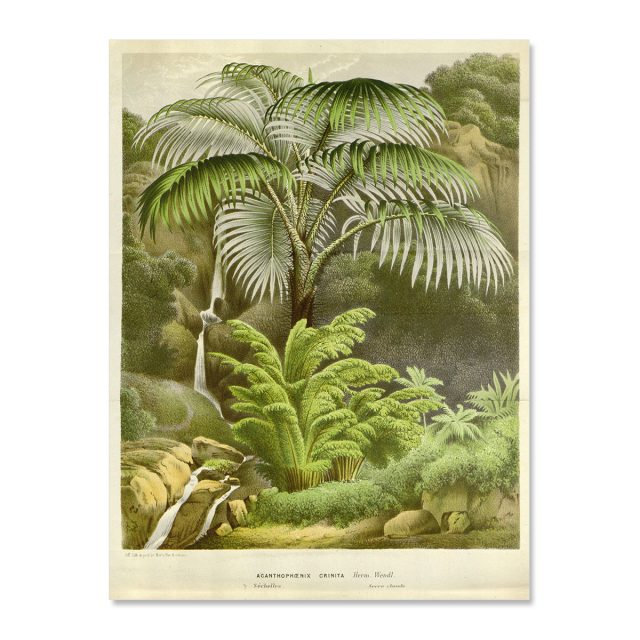Vintage poster palm with river on the Seychelles no frame