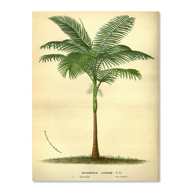 Vintage palm tree seychelles no frame