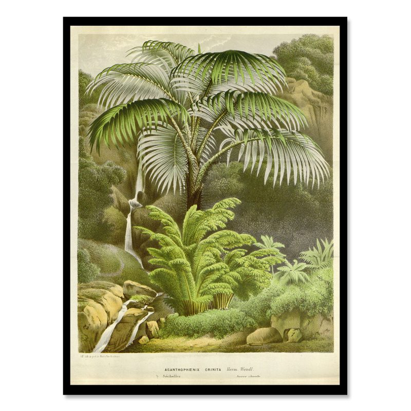 Vintage poster palm with river