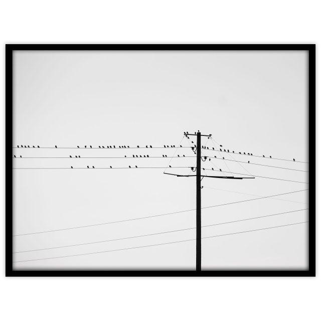 Fåglar på tråd #3 - Studio Caro-lines