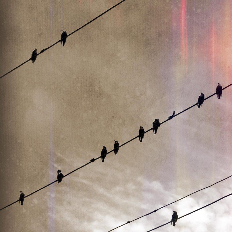 Fåglar på tråd #4 - Studio Caro-lines