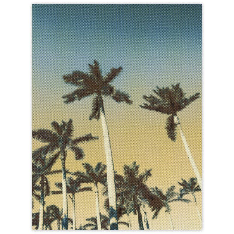 Blå himmel och palmsus - Studio Caro-lines