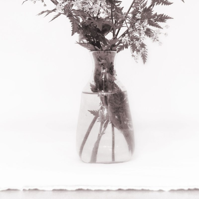 Hundkex - Studio Caro-lines