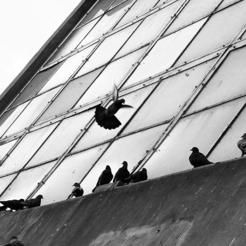 Duvor på en fasad - Studio Caro-lines