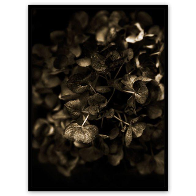 Gyllene hortensia - Studio Caro-lines