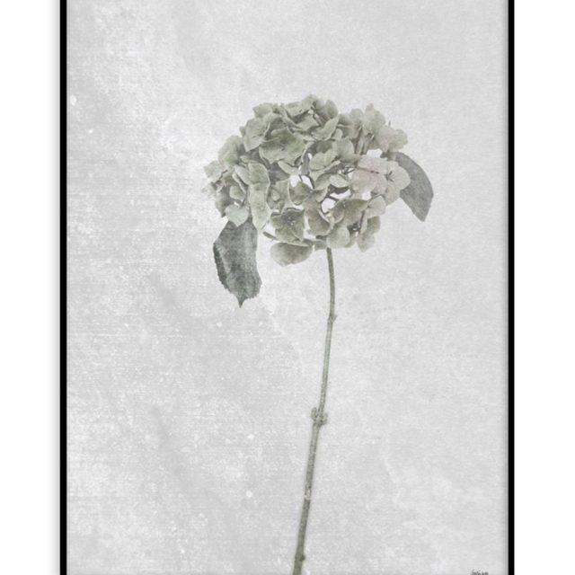 Hortensia (30x40 cm) - Studio Caro-lines